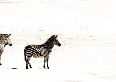 Stripes on Sand