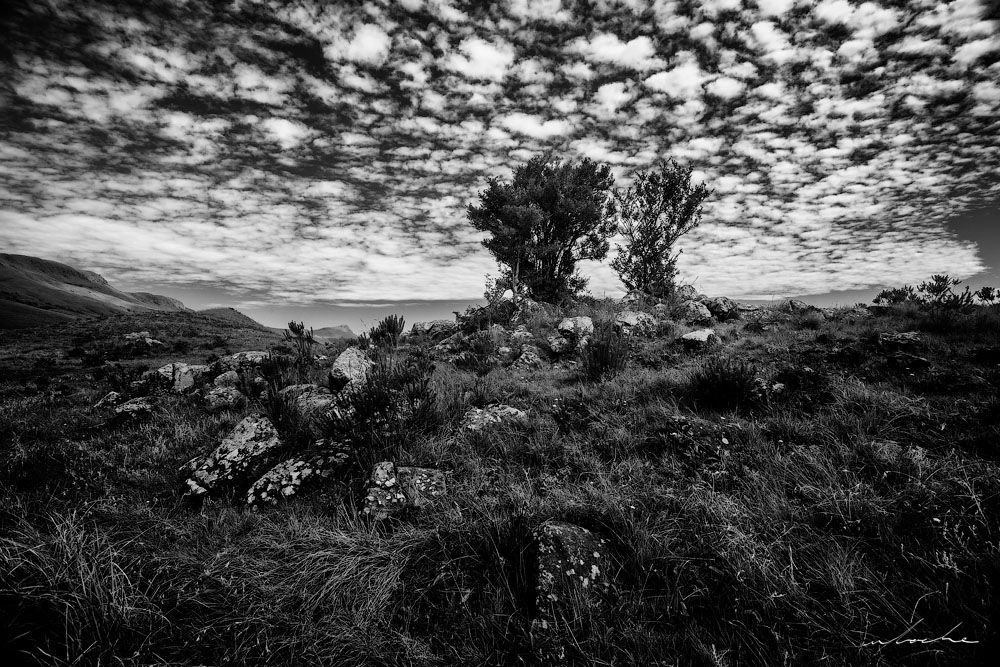 Black and White landscape image of a lichen covered rocks and a small bush beneath a mottled sky
