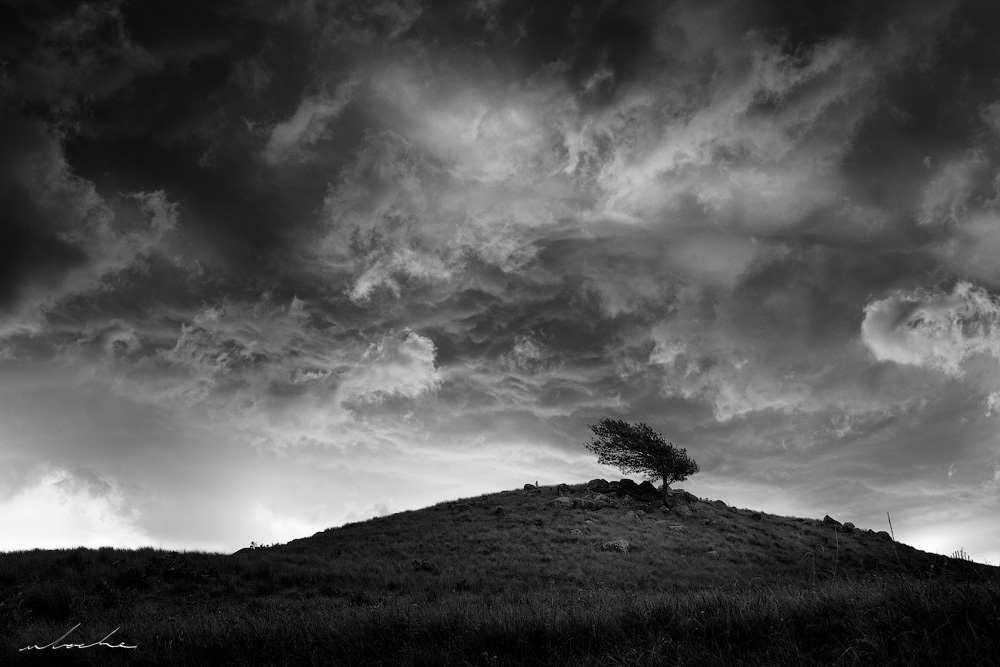 A black and white landscape photograph of a lone tree beneath a stormy sky