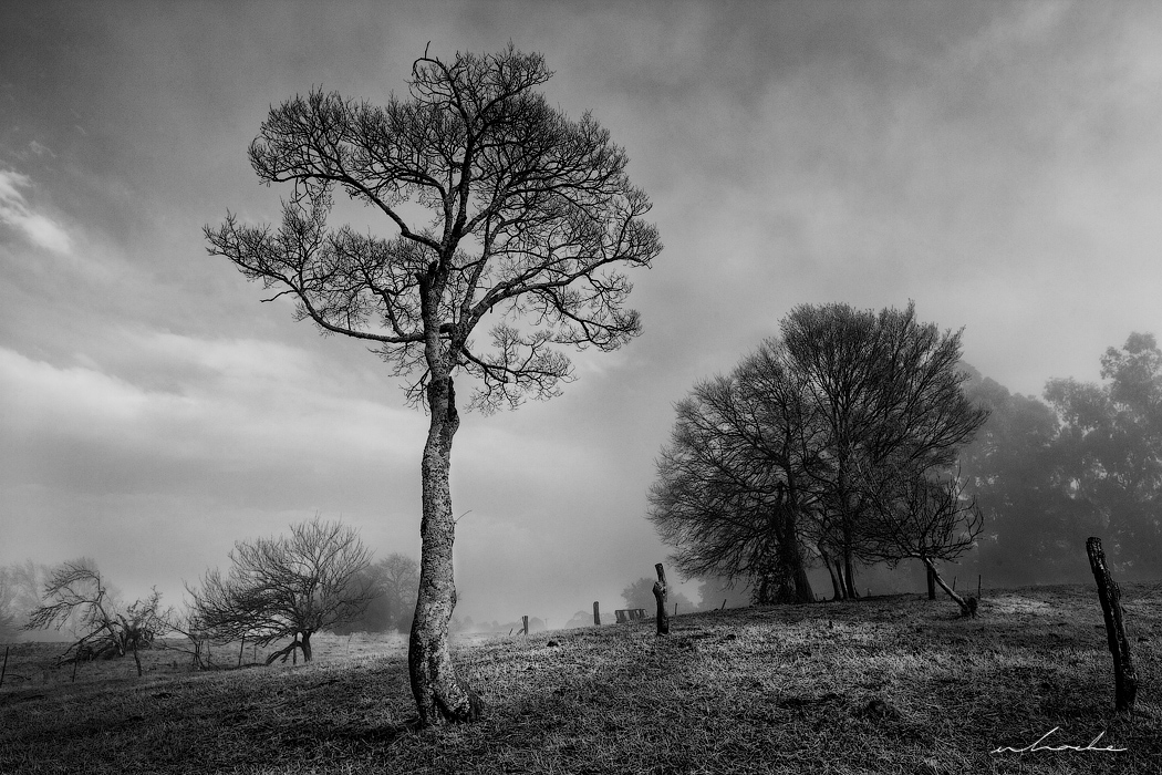 Black and white photograph of a misty parkland scene situated in the KwaZulu Natal Midlands